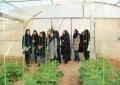 گزارش تصویری بازدید دانشجویان صنایع غذایی از  گلخانه پارسی پور بافق